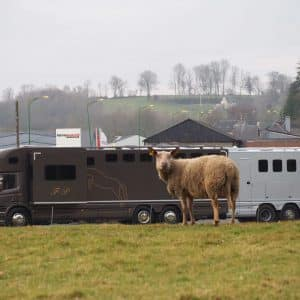 Camion Chardron pour vos chevaux